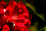 Fleurs jardin_3