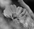 Noir & blanc_4