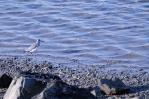 oiseaux-perros_1