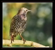 Oiseaux_50
