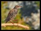 Oiseaux_52