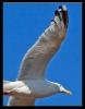 Oiseaux_63