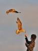 Oiseaux_66