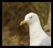 Oiseaux_72