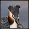 Oiseaux_73