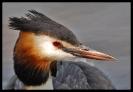 Oiseaux_75