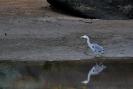Oiseaux_80