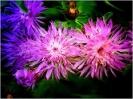 Travail sur fleurs_11
