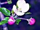 Travail sur fleurs_13