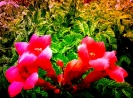 Travail sur fleurs_1