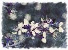 Travail sur fleurs_4